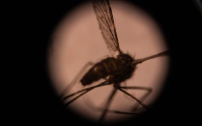 Results in the News: Covid could derail efforts to eradicate malaria in Pacific, health experts warn